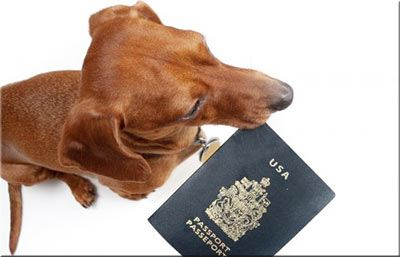 DogFriendly.com - Taking Your Dog From the U.S. or Canada ...